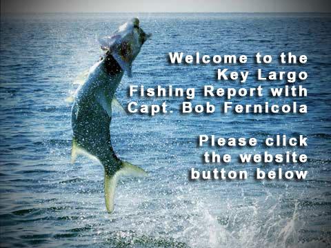 Key largo fishing report on keystv for Key largo party boat fishing