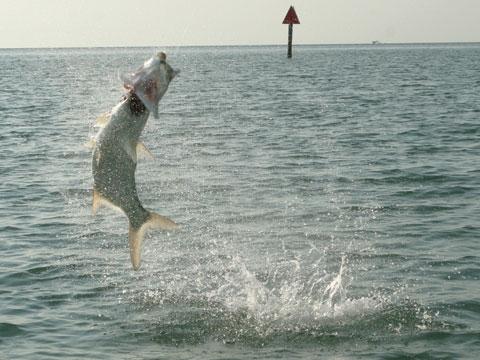 Key west fly fishing on keystv for Key west fly fishing